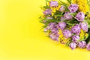 Картинка Букет Акация серебристая Тюльпан Цветной фон цветок
