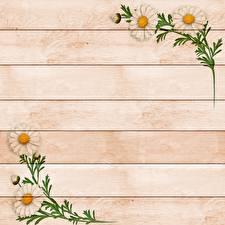 Фотографии Ромашка Рисованные Доски Шаблон поздравительной открытки Цветы