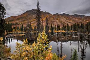 Фото Канада Парк Гора Озеро Осенние Банф Ели Природа