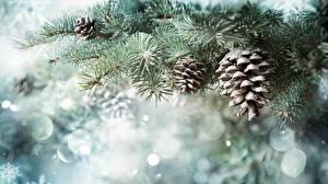 Обои для рабочего стола Рождество Шишка Снега Ветки