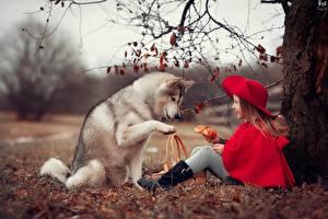 Фотография Собаки Хаски Девочки Красная Шапочка Сидя Anna Ipatieva Дети Животные
