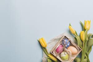 Фото Пасха Тюльпан Сером фоне Желтая Яйцо Шаблон поздравительной открытки