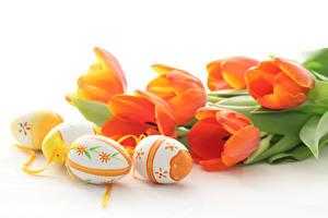 Обои Пасха Тюльпаны Белом фоне Яиц Дизайн цветок Цветы