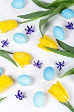 Картинки Пасха Тюльпаны Белый фон Желтая Яйца Лепестков Цветы