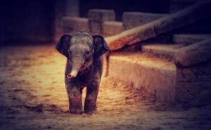 Обои Слоны Детеныши HDR животное