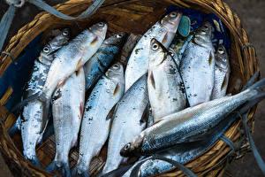 Картинка Рыба Корзина Пища
