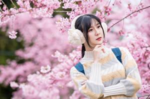 Обои Цветущие деревья Азиатки Боке Свитере Рука Брюнетки В наушниках девушка