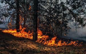 Фото Леса Огонь Трава Дерева wildfire