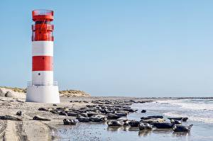 Фотографии Германия Остров Маяк Берег Морские котики Море North Sea, Helgoland Животные