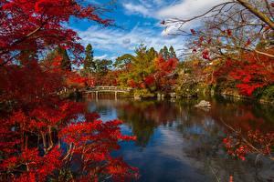 Фотография Киото Япония Парк Речка Мост Природа