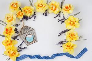 Обои Лаванда Нарциссы Ленточка композиция цветок