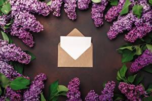 Фотография Сирень Весна Письмо Шаблон поздравительной открытки Цветок Цветы