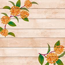 Фотографии Рисованные Доски Ветвь Шаблон поздравительной открытки цветок