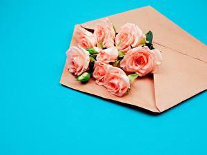 Фото Роза Букет Цветной фон Конверт цветок