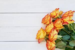 Обои для рабочего стола Роза Букет Доски Оранжевая Желтая цветок