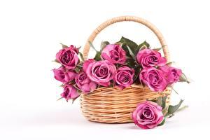 Картинки Роза Белом фоне Корзина Розовая цветок