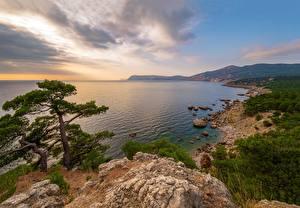 Обои для рабочего стола Россия Крым Берег Море Утес Дерево Урочище Аязьма Природа
