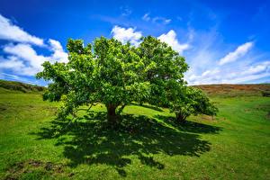 Картинка Небо Чили Облачно Деревьев Тень Холмы Ranu Raraku, Easter Island Природа