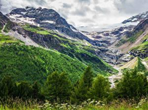 Картинки Швейцария Горы Леса Мох Скала Ручей Morteratsch Glacier