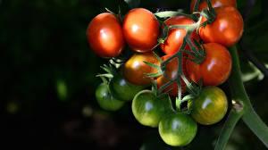 Фото Томаты Вблизи Ветвь Зеленая Пища