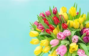 Обои Тюльпан Букет Цветной фон Разноцветные цветок