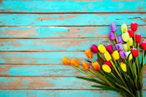 Фото Тюльпаны Букет Разноцветные Доски Шаблон поздравительной открытки Цветы