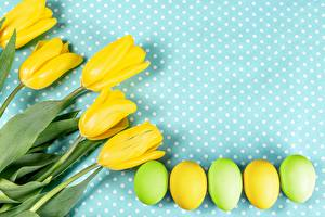 Картинка Тюльпан Пасха Яйцо Желтая цветок Еда