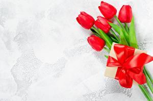 Обои для рабочего стола Тюльпаны Подарков Шаблон поздравительной открытки Цветы