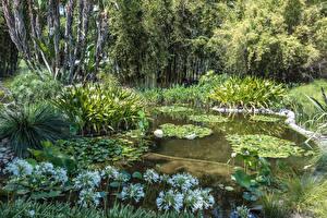 Обои для рабочего стола Америка Сады Пруд Кувшинки Калифорнии Кустов Botanical Gardens in San Marino Природа