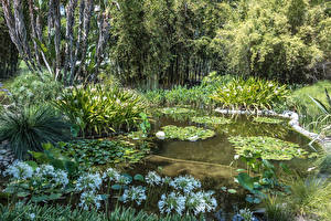 Картинки Америка Сады Пруд Кувшинки Калифорнии Кустов Botanical Gardens in San Marino
