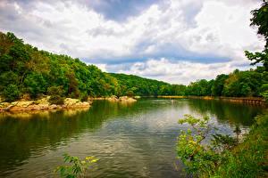Картинка Штаты Речка Лес Columbia Maryland Природа