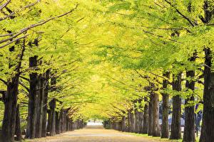 Фотография Осенние Аллеи Дерево Тротуар