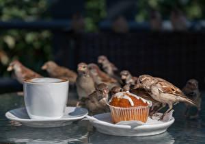 Обои Птица Воробей Кофе Кекс Чашка животное
