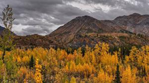 Фото Канада Парки Осень Гора Банф Деревьев Природа