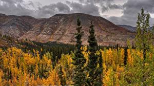 Фотографии Канада Парк Осенние Гора Банф Дерево Природа