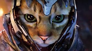 Фотографии Коты Морды В шлеме Взгляд животное Фэнтези