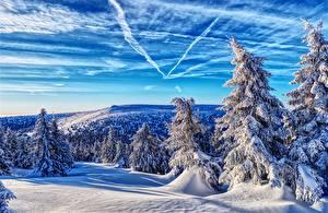 Фото Чехия Зимние Леса Гора Пейзаж Небо Снеге Дерево Ель Jeseníky Mountains Природа