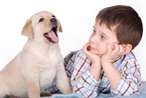 Фотографии Собака Золотистый ретривер Белом фоне Мальчик Щенки Язык (анатомия) Руки ребёнок Животные
