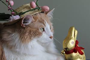 Обои Пасха Кот Кролик Шляпа Яиц Животные