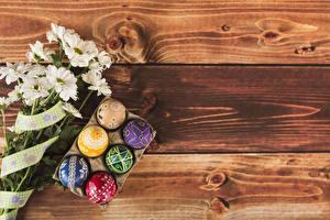 Фотография Пасха Хризантемы Доски Яйцо Дизайна Шаблон поздравительной открытки Пища Цветы
