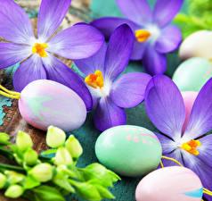 Картинка Пасха Шафран Вблизи Яйцо цветок