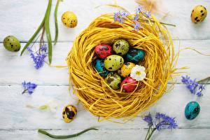 Фотография Пасха Гнездо Яйца Разноцветные