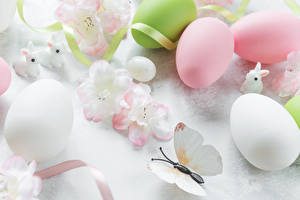 Фотография Пасха Кролики Бабочки Яйца Лента Пища