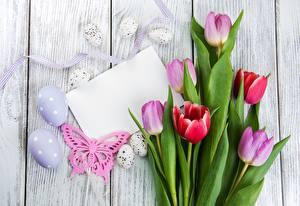 Обои Пасха Тюльпан Яйца Доски Лист бумаги Шаблон поздравительной открытки Цветы