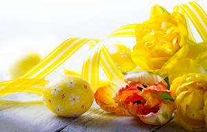 Фотография Пасха Тюльпан Ленточка Яйцо цветок Еда