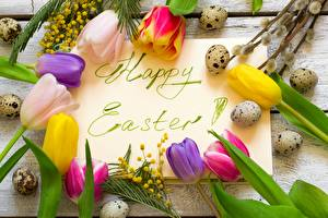 Картинки Пасха Тюльпаны Акация серебристая Яйцами Слово - Надпись Английская