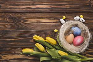 Картинки Пасха Тюльпан Доски Яйцо Желтая Гнезда Шаблон поздравительной открытки цветок Еда