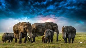 Обои для рабочего стола Слоны Детеныши Облака Стадо животное
