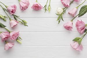 Фотографии Лизантус Белых Розовый Доски Шаблон поздравительной открытки Цветы