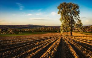 Картинка Франция Поля Цветущие деревья Холм Alsace Природа